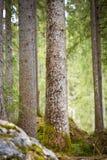 Alberi nel lago Hintersee, Berchtesgaden, Germania Fotografia Stock