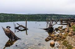 Alberi nel lago in isola del sud, Nuova Zelanda Fotografia Stock Libera da Diritti