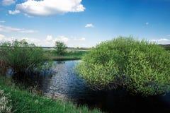 Alberi nel lago sui precedenti della natura in primavera il fogliame succulente dentro può Immagini Stock Libere da Diritti