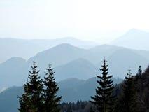 Alberi nel mondo alpino fotografia stock libera da diritti