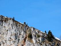 Alberi nel mondo alpino immagine stock libera da diritti