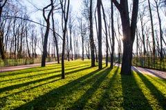 Alberi nel parco Fotografia Stock Libera da Diritti
