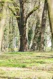 Alberi nel parco Immagine Stock