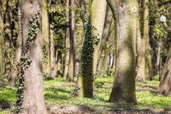 Alberi nel parco Immagini Stock Libere da Diritti