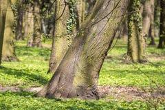 Alberi nel parco Fotografie Stock