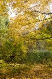 Alberi nel parco all'autunno Fondo, natura immagini stock