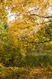 Alberi nel parco all'autunno Fondo, natura fotografia stock libera da diritti