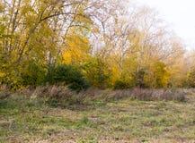 Alberi nel parco all'autunno Fondo, natura immagini stock libere da diritti