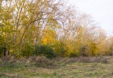 Alberi nel parco all'autunno Fondo, natura fotografia stock