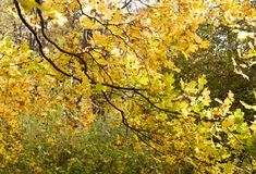 Alberi nel parco all'autunno Fondo, natura fotografie stock libere da diritti