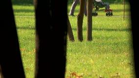 Alberi nel parco ammucchiato della città archivi video