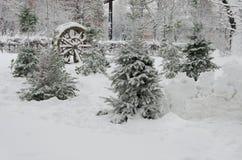 Alberi nel parco, coperto di neve immagini stock libere da diritti