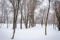 Alberi nel parco di Natalka, vicino al fiume di Dnieper a Kiev, l'Ucraina fotografie stock libere da diritti