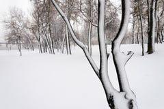Alberi nel parco di Natalka, vicino al fiume di Dnieper a Kiev, l'Ucraina fotografia stock