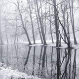 Alberi nel parco durante l'alta marea di fonte Fotografia Stock