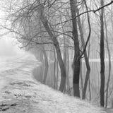 Alberi nel parco durante l'alta marea di fonte, in bianco e nero Fotografia Stock