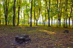 Alberi nel parco soleggiato di autunno Fotografia Stock