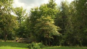 Alberi nel ponte di legno e della foresta paesaggio archivi video