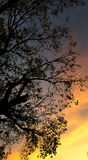 Alberi nel tramonto Fotografia Stock
