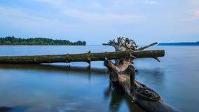 Alberi nell'acqua su un'esposizione lunga Fotografia Stock Libera da Diritti