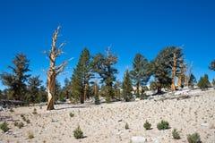 Alberi nell'alta sierra montagne Fotografie Stock Libere da Diritti