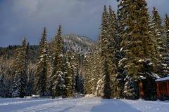 Alberi nell'ambito di luce solare di inverno immagine stock libera da diritti