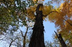 Alberi nell'arboreto, Ann Arbor, Michigan U.S.A. immagini stock libere da diritti