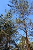 Alberi nell'IBM Moorland in Austria settentrionale, in autunno in anticipo fotografie stock libere da diritti