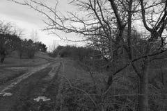 Alberi nell'inverno Immagine Stock