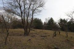 Alberi nell'inverno Fotografie Stock