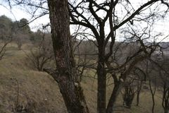 Alberi nell'inverno Fotografia Stock