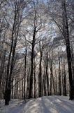 Alberi nell'inverno Fotografie Stock Libere da Diritti