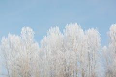 Alberi nell'inverno nell'inverno Bella immagine di inverno landscape Gelo sugli alberi nell'inverno immagini stock libere da diritti