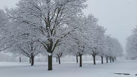 Alberi nell'inverno con le precipitazioni nevose pesanti Immagine Stock