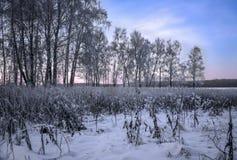 Alberi nell'inverno freddo in Russia fotografia stock