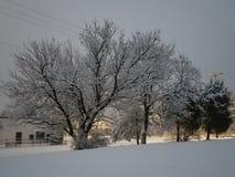 Alberi nell'inverno immagini stock libere da diritti