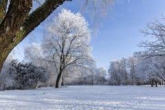 Alberi nell'orario invernale Fotografia Stock