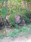 alberi nella banca del rigagnolo Immagini Stock Libere da Diritti