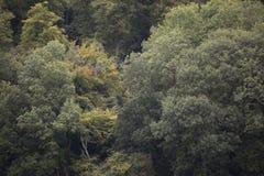 Alberi nella distanza immagine stock
