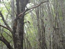 Alberi nella foresta Fotografia Stock Libera da Diritti