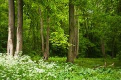 Alberi nella foresta Immagini Stock Libere da Diritti