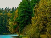 Alberi nella foresta Fotografia Stock