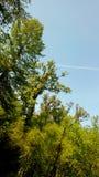 Alberi nella foresta Immagini Stock