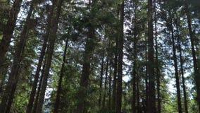 alberi nella foresta contro il cielo
