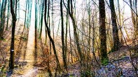 Alberi nella foresta contro la lampadina Immagine Stock Libera da Diritti