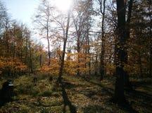 Alberi nella foresta durante il giorno soleggiato di autunno in Slovacchia ad ovest immagini stock libere da diritti