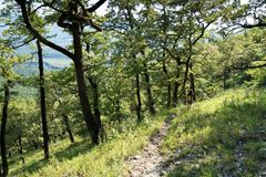 Alberi nella foresta, paesaggio della montagna, bella vista delle montagne, la gente nelle montagne, riserva naturale immagine stock