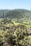 Alberi nella montagna Fotografia Stock