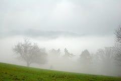 Alberi nella nebbia Fotografie Stock