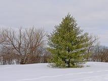 Alberi nella neve lungo la traccia di inverno di Sjam, Canada, Ottawa fotografia stock libera da diritti